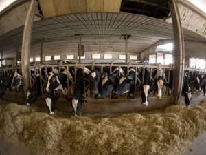 farm-cctv-picture